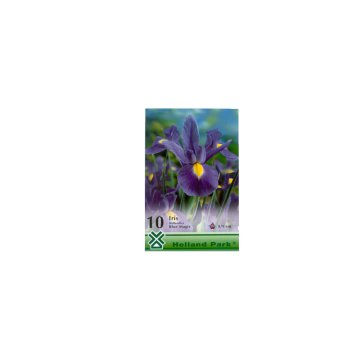 VH 1.IRIS DUTCH BLUE MAGIC 8-9 CM   (1 CS=10 DB)