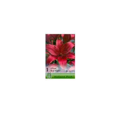 VH 1.LILIUM RED NIGHT (ASIATIC RED) (1 CS=1 DB)- LILIOM