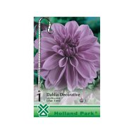 DAHLIA DECORATIVE LILAC TIME LILA
