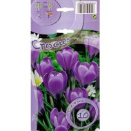 CROCUS LARGE FLOWERING FLOWER RECORD 7-8CM